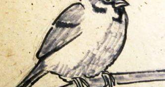 Рисунки карандашом к рассказу «Растрепанный воробей» (17 фото)