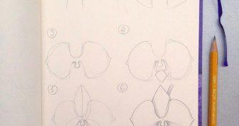 Рисунки карандашом орхидея (37 фото)