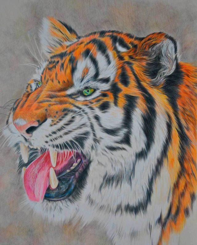 классы рисунки животные тигр овощи получаются очень