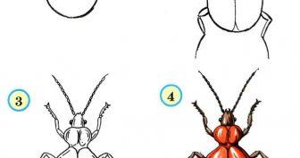 Рисунки насекомых карандашом (33 фото)