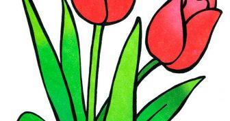 Рисунки тюльпана карандашом для детей (34 фото)
