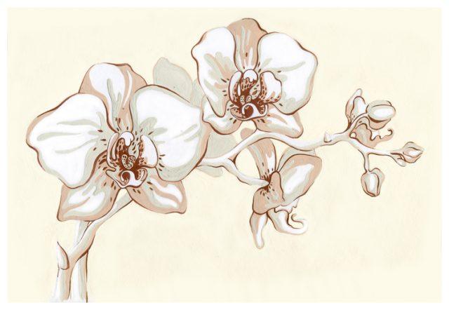 Рисунки карандашом орхидея (37 фото) 🔥 Прикольные картинки ...