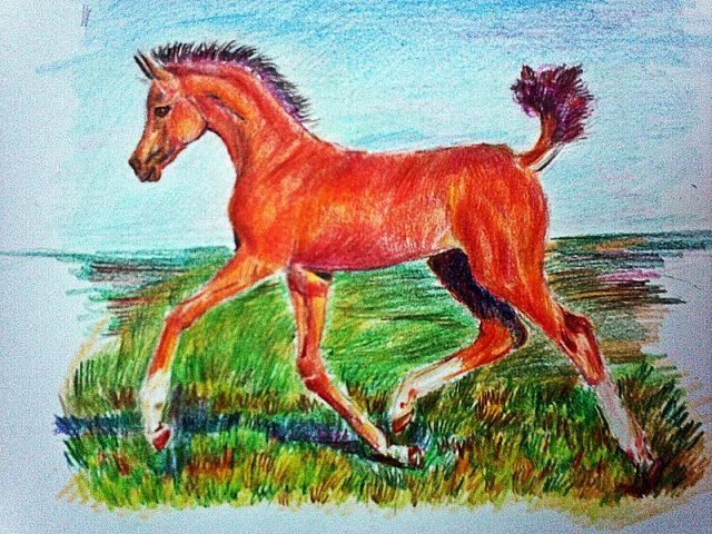 Детские рисунки лошадей цветными карандашами