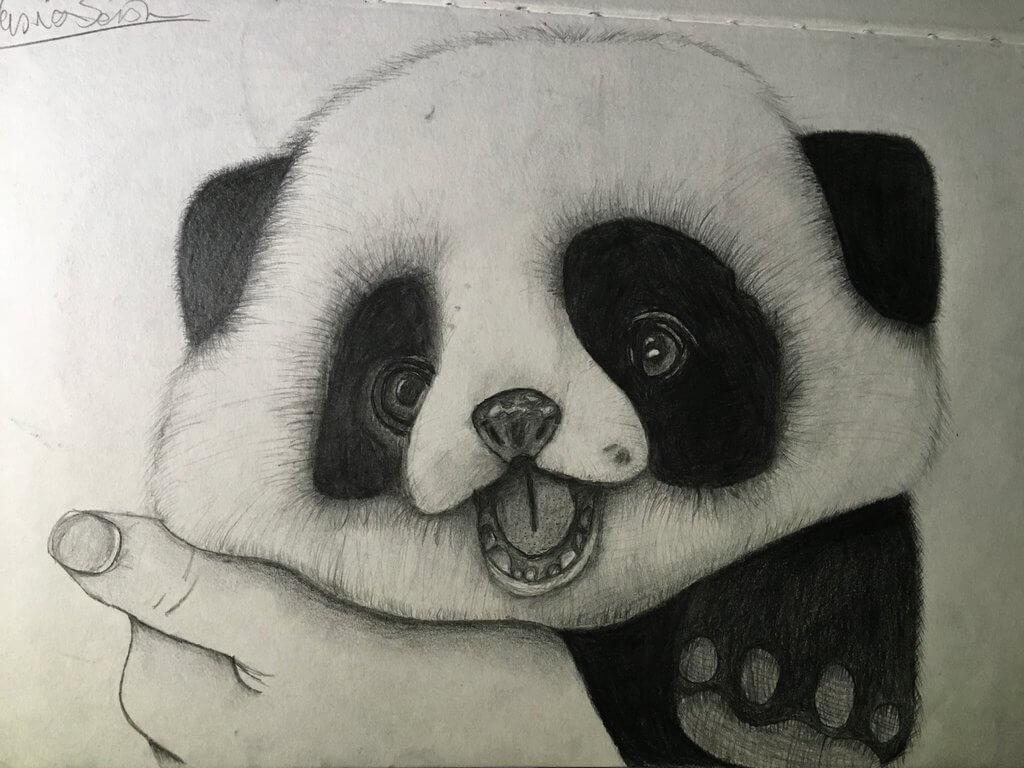 хорошую животные рисунки карандашом легко панда всего появляется экранах