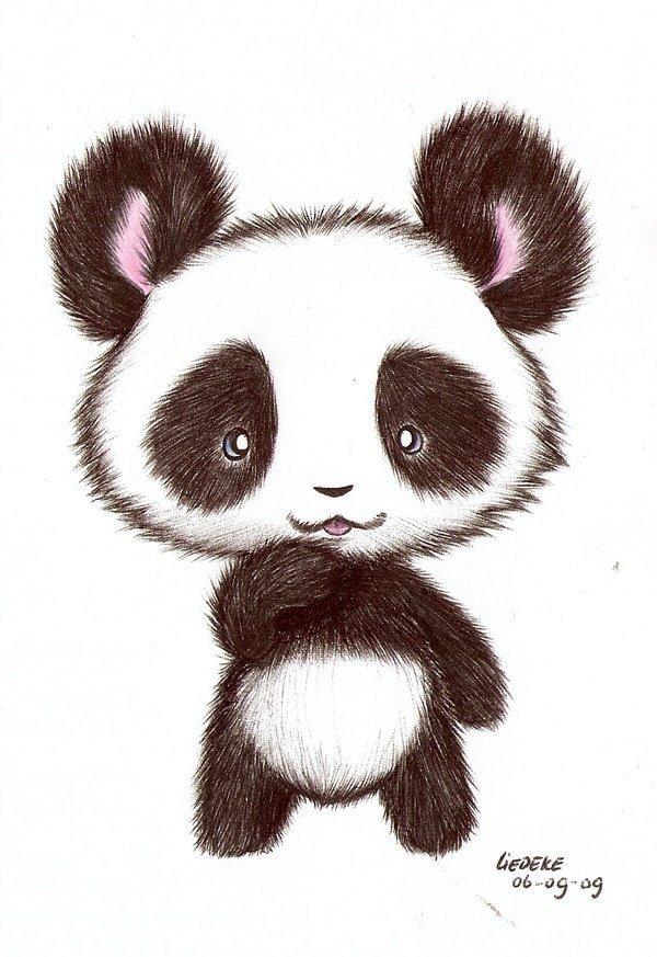 Милые картинки панд для срисовки
