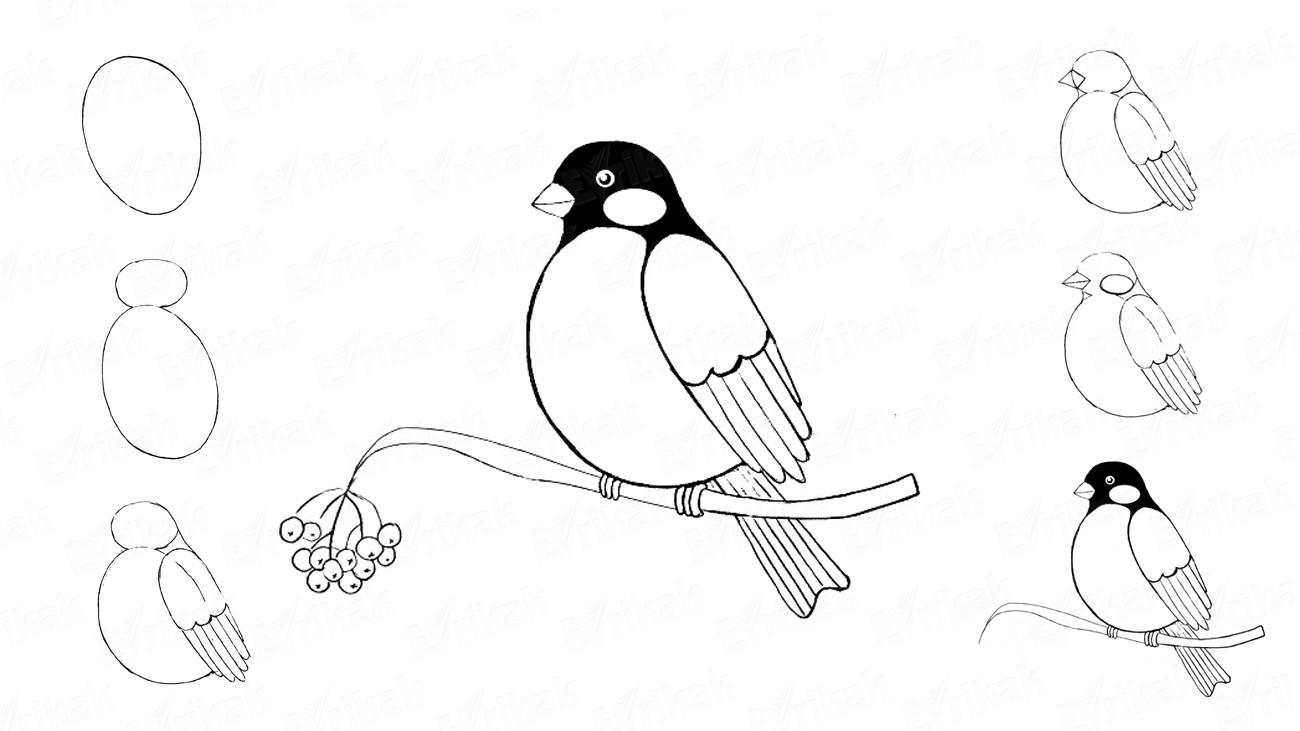 Картинки как нарисовать птицу на ветке