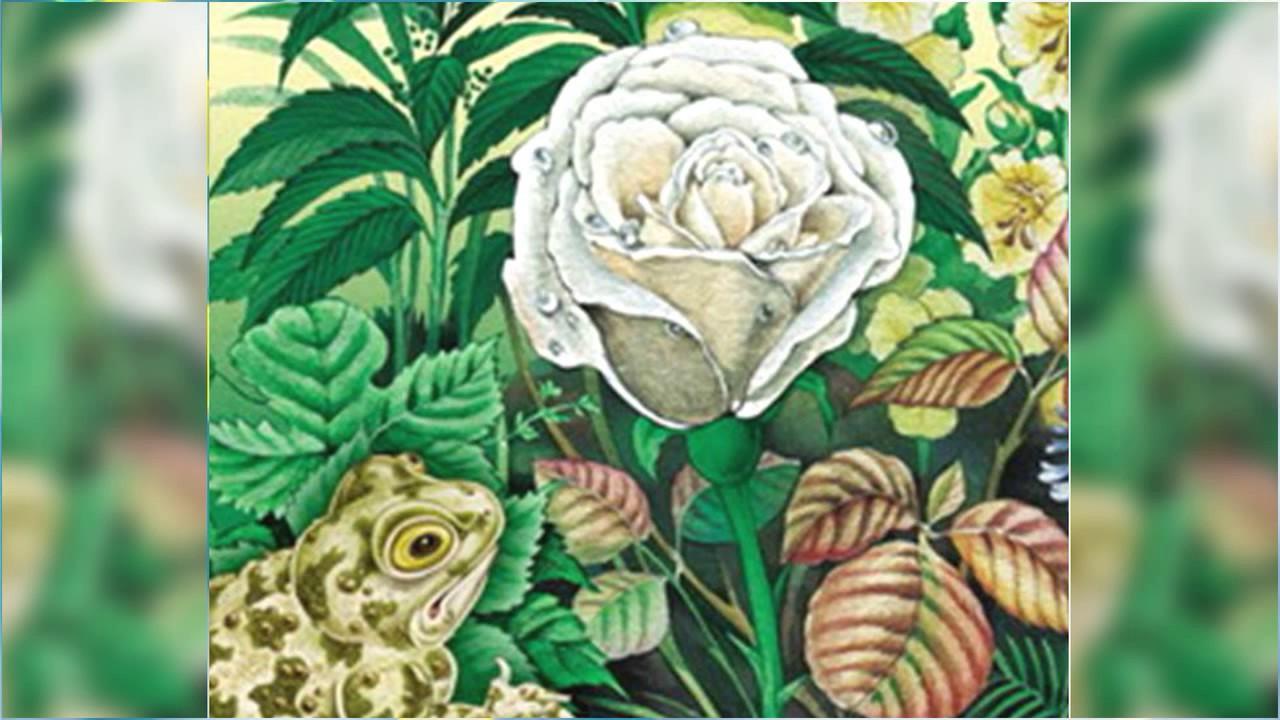рисунок жабы и розы из сказки гаршина