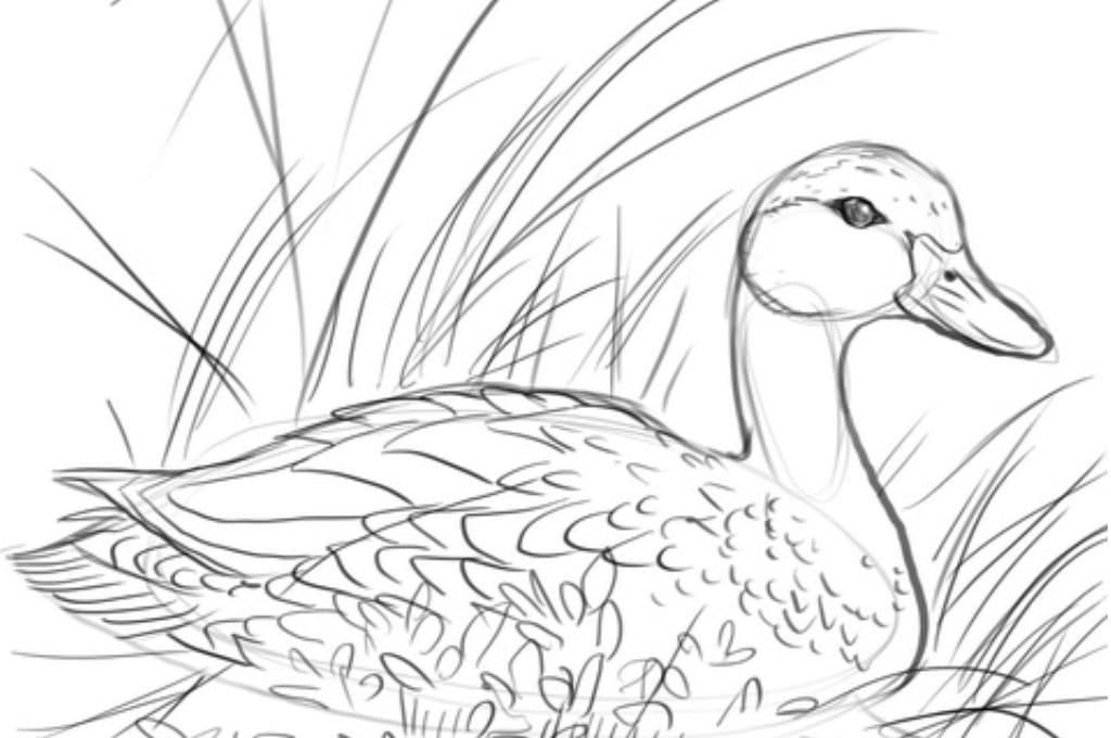 картинки диких птиц простым карандашом разницу между реальностью