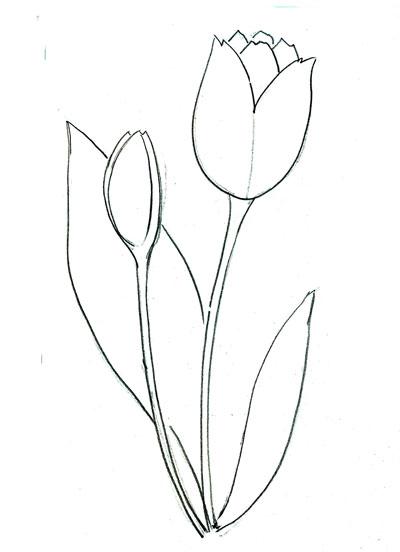 все тюльпаны рисовать карандашом картинки фанатов