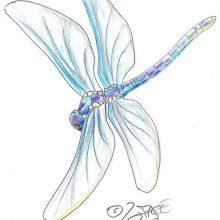 Рисунки карандашом стрекоза (29 фото)