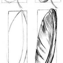 Рисунки карандашом перо (22 фото)