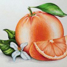 Цветные рисунки для срисовки (33 фото)