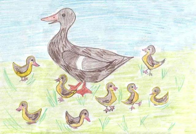 Рисунки для детей утка с утятами (22 фото) 🔥 Прикольные ...