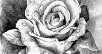 Очень красивые рисунки простым карандашом (35 фото)