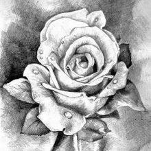 Клевые рисунки простым карандашом (31 фото)