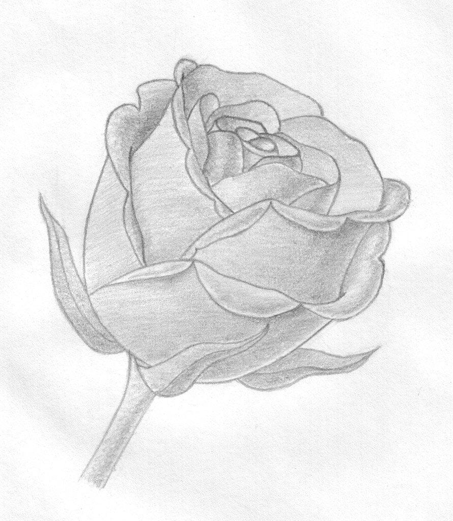 Смотреть рисунки карандашом цветы картинки