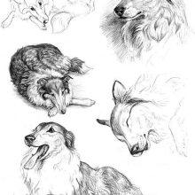 Рисунки карандашом разных животных (31 фото)