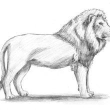 Рисунки карандашом для срисовки животные хищники (14 фото)