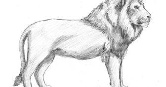 Рисунки карандашом для срисовки животные хищники (15 фото)