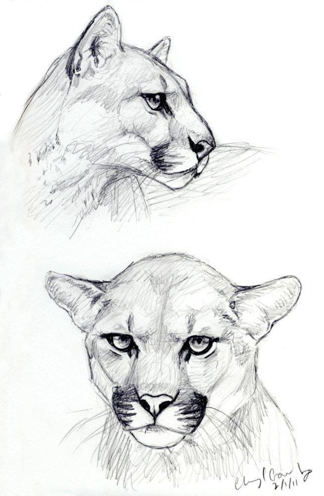 разные картинки животных карандашом