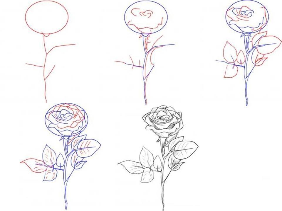 красивые рисунки пошагово для начинающих карандашом елена знаменита своими