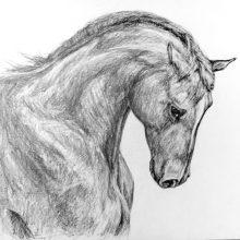 Рисунки для срисовки в скетчбук необычные животные (17 фото)