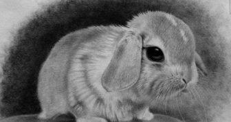 Рисунки карандашом животные для скетчбука (53 фото)