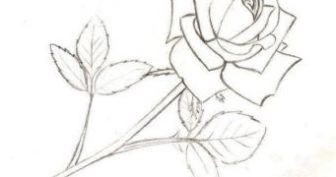 Рисунки для срисовки в скетчбук цветы (19 фото)
