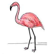 Рисунки фламинго для срисовки в скетчбук (18 фото)