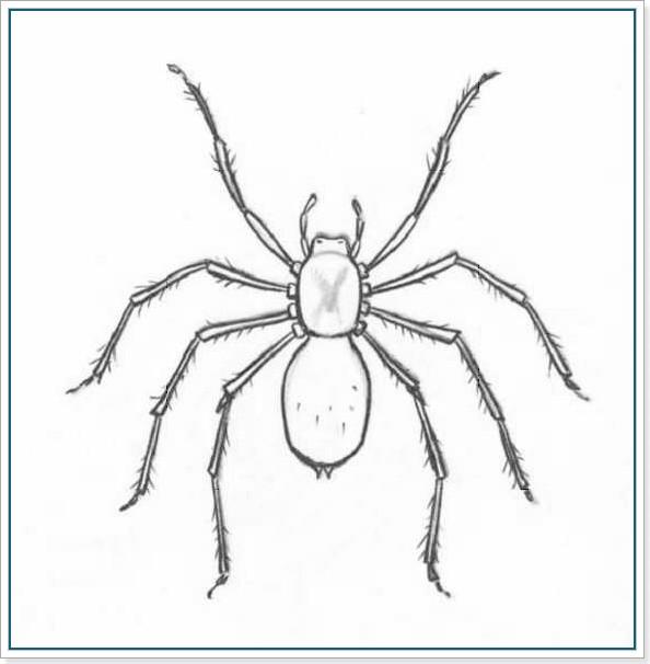 Картинка паука срисовать