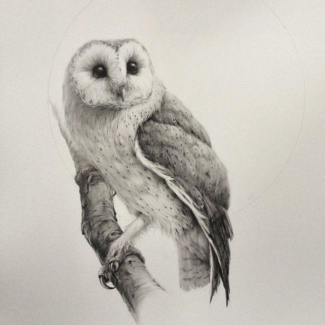Рисунки совы карандашом для срисовки (35 фото ...
