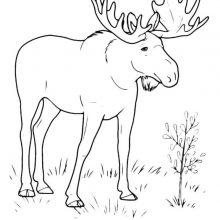 Черно-белые рисунки для срисовки животные (34 фото)