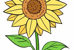 Рисунки карандашом для детей подсолнухи (21 фото)