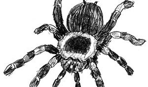 Рисунки паука карандашом для детей (25 фото)