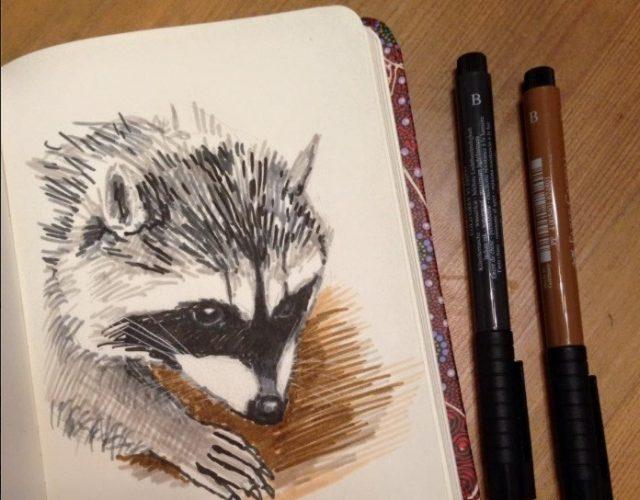 Рисунки енота для срисовки (29 фото) 🔥 Прикольные картинки ...