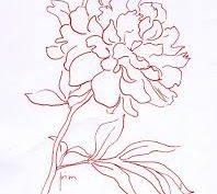 Рисунки карандашом пионы (30 фото)