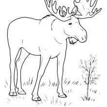 Черно-белые рисунки для срисовки животные (37 фото)