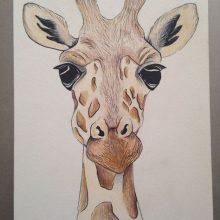 Рисунки для срисовки жираф (24 фото)