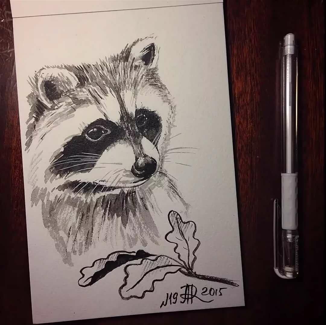 Картинки енотов для срисовки поэтапно