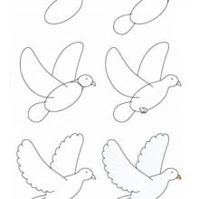 Рисунки голубя карандашом для детей (30 фото)
