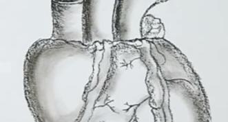 Рисунки карандашом для начинающих анатомия (27 фото)