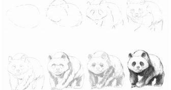 Основы рисунка карандашом для начинающих (33 фото)