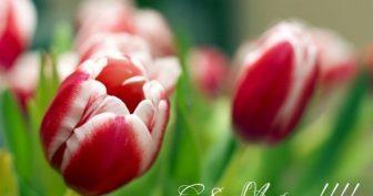 Картинки с короткими пожеланиями маме на 8 марта (35 фото)