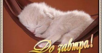 Короткие пожелания Спокойной ночи (32 фото)
