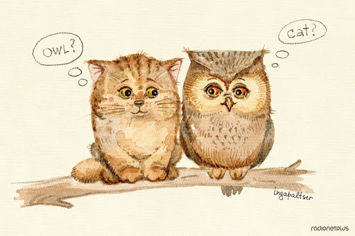 Милые картинки совушек для срисовки (29 фото) 🔥 Прикольные ...