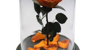 Рисунки карандашом роза в колбе (16 фото)