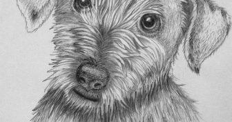 Простые и смешные рисунки карандашом (25 фото)
