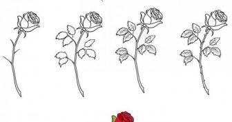 Картинки розы для срисовки поэтапно (18 фото)