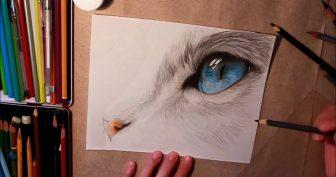 Картинки для срисовки цветными карандашами (29 фото)