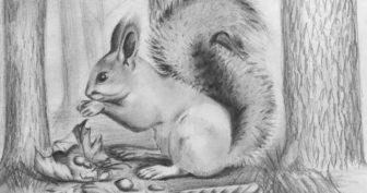 Рисунки карандашом природы и животных (29 фото)
